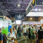 cannabis expo cape town event africa